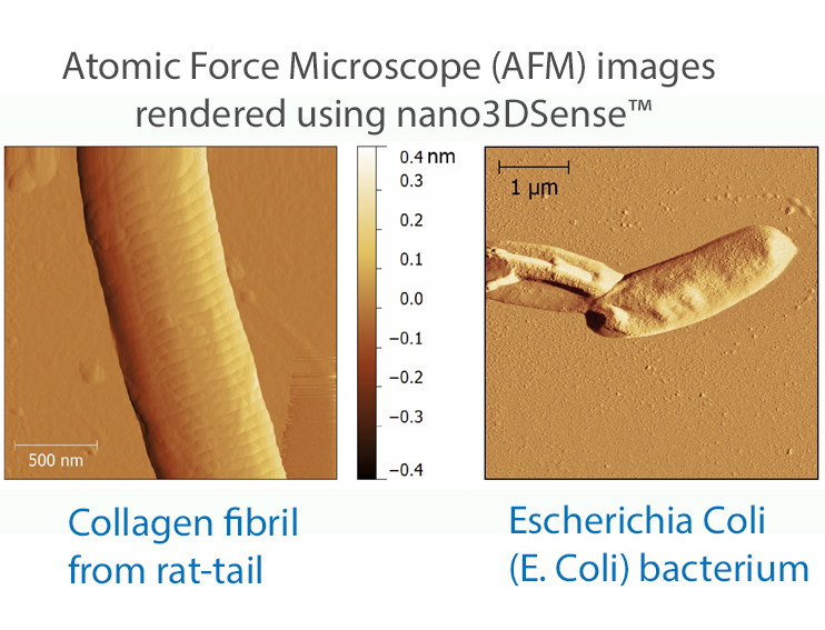 afm-vivo-images-rat-tail-and-e-coli2-with-large-letters-2